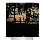 Birches Watch The Sunset Shower Curtain