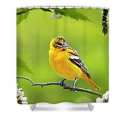 Bird And Blooms - Baltimore Oriole Shower Curtain