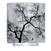 Bird And Tree Shower Curtain