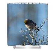 Bird At Pontatoc Shower Curtain