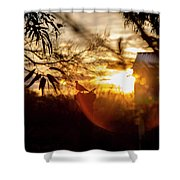 Bird At Sunset Color Shower Curtain