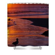 Bird At Sunset Shower Curtain