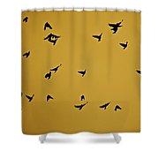 Bird Ballet Shower Curtain
