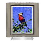 Bird Beauty - No. 7 P A With Decorative Ornate Printed Frame. Shower Curtain