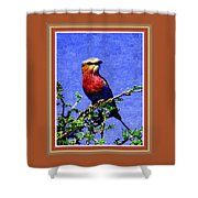 Bird Beauty - No 7 P B With Alternative Decorative Ornate Printed Frame. Shower Curtain