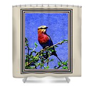 Bird Beauty - No 7 P B With Decorative Ornate Printed Frame. Shower Curtain