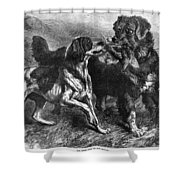 Bird Dogs, 1868 Shower Curtain