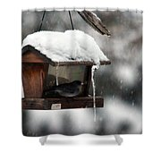 Bird House Blues Shower Curtain