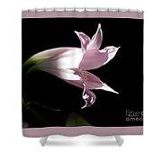 Lovely Lilies Bird In Flight Shower Curtain