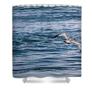 Bird In Flight Over Water Shower Curtain