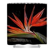 Bird In Flight Vivid Colors Shower Curtain