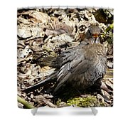 Bird In Hiding Shower Curtain