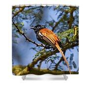 Bird In High Ground Shower Curtain