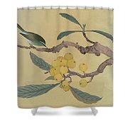 Bird In Loquat Tree Shower Curtain