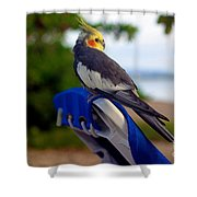 Bird In Paradise Shower Curtain