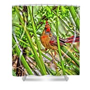 Bird In The Brush H D R Shower Curtain