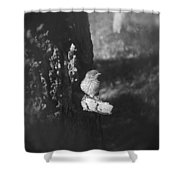 Bird In View Shower Curtain