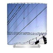 Bird Invasion Shower Curtain