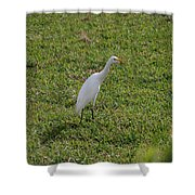 Bird Is The Word Shower Curtain