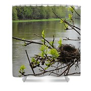 Bird Nest In Ash Tree Branches Shower Curtain