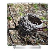 Bird Nest In Wild Rose Bush Shower Curtain