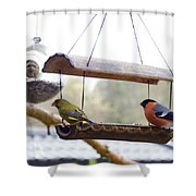 Bird Of Europe.norway Shower Curtain