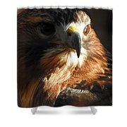 Bird Of Mystery Shower Curtain