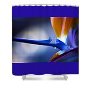 Bird Of Paradise 1 Shower Curtain