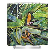 Bird Of Paradise 2 Shower Curtain