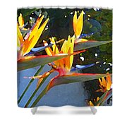 Bird Of Paradise Backlit By Sun Shower Curtain by Amy Vangsgard