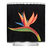 Bird Of Paradise Collection Shower Curtain