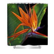 Bird Of Paradise Digital Art Shower Curtain