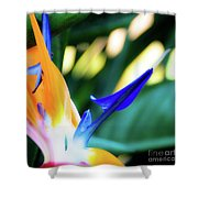 Bird Of Paradise Flower Shower Curtain