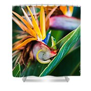 Bird Of Paradise Gecko Shower Curtain