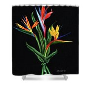Bird Of Paradise In Black Shower Curtain