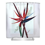 Bird Of Paradise Lily Shower Curtain