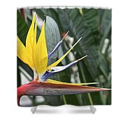 Bird Of Paradise Longwood Gardens Shower Curtain