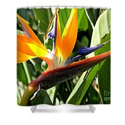 Bird Of Paradise Shower Curtain