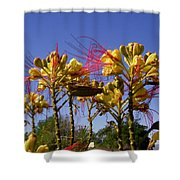 Bird Of Paradise Shrub Shower Curtain