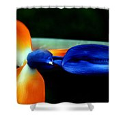 Bird Of Paradise Study 1 Shower Curtain