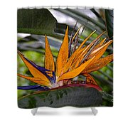 Bird Of Paradise Work Number Three Shower Curtain