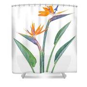 Bird Of Paradize Flowers Shower Curtain