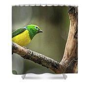 Bird Of Peru Shower Curtain