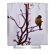 Bird On A Bud Shower Curtain