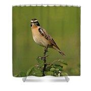 Bird On A Bush  Shower Curtain