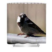 Bird On A Fence Shower Curtain