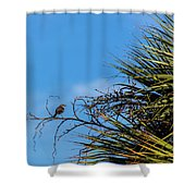 Bird On A Palm Branch Shower Curtain