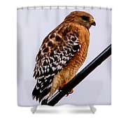Bird On A Wire With Attitude Shower Curtain