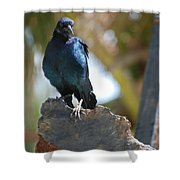 Bird On An Anchor Shower Curtain