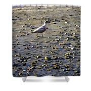 Bird On Beach Shower Curtain